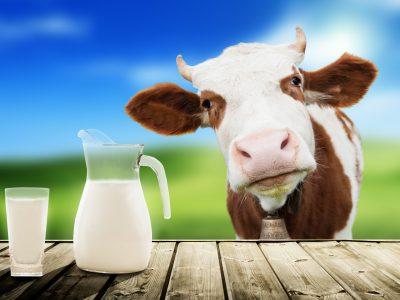Il mondo del latte