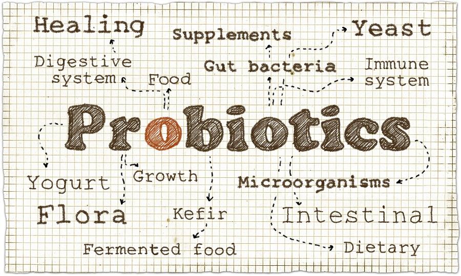 Intestino e probiotici
