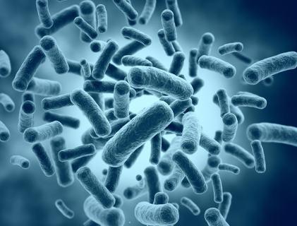 batteri - integratori probiotici