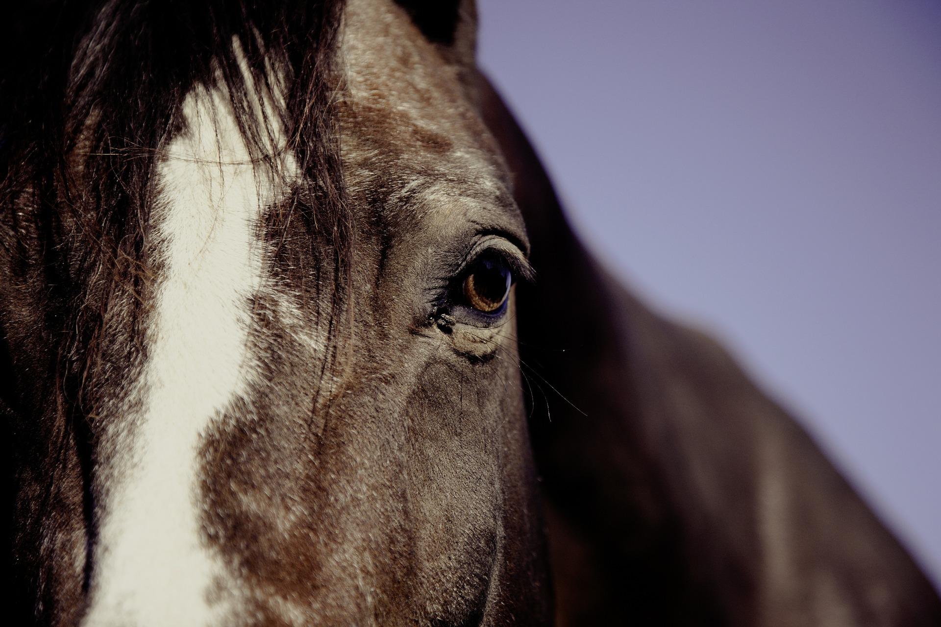 Oggi siamo a lezione di equitazione!