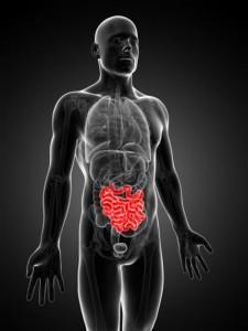 intestino solo1
