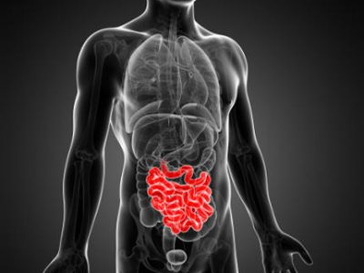 Intestino, un organo fondamentale. Perché?