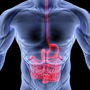 intestino1