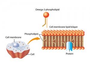 membrana cellulare 1