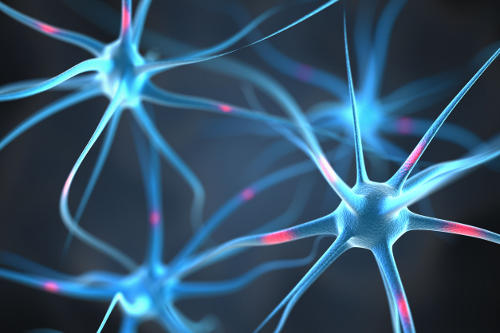 sistema nervoso1