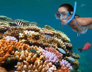 snorkeling e barriera corallina