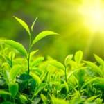sole e piante1